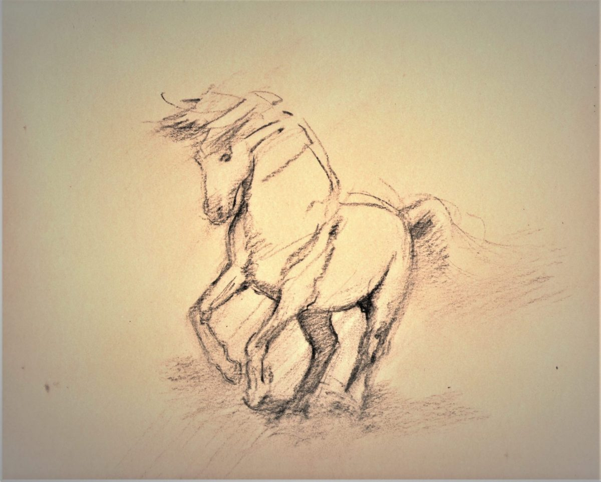 Pale Horse Sketch Charcoal on Paper 14.5 x 11 Rebecca King Hawkinson