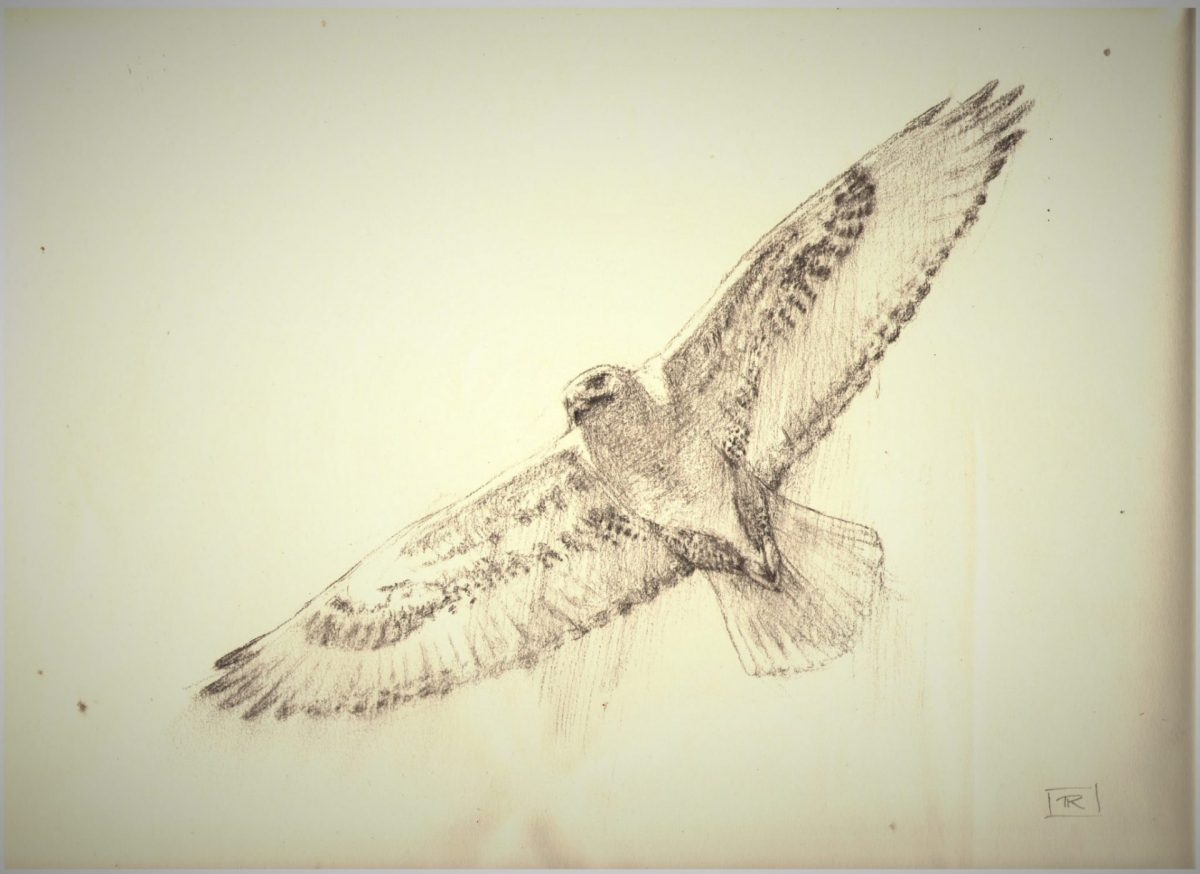 Pitch Charcoal Sketch 9x12.5 Rebecca King Hawkinson