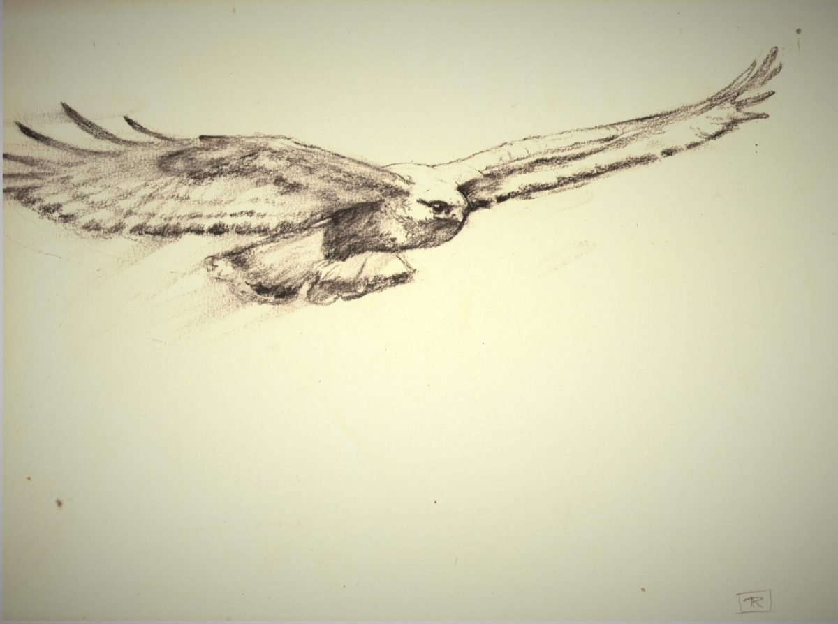 Strike Charcoal Sketch 9x12.5 Rebecca King Hawkinson