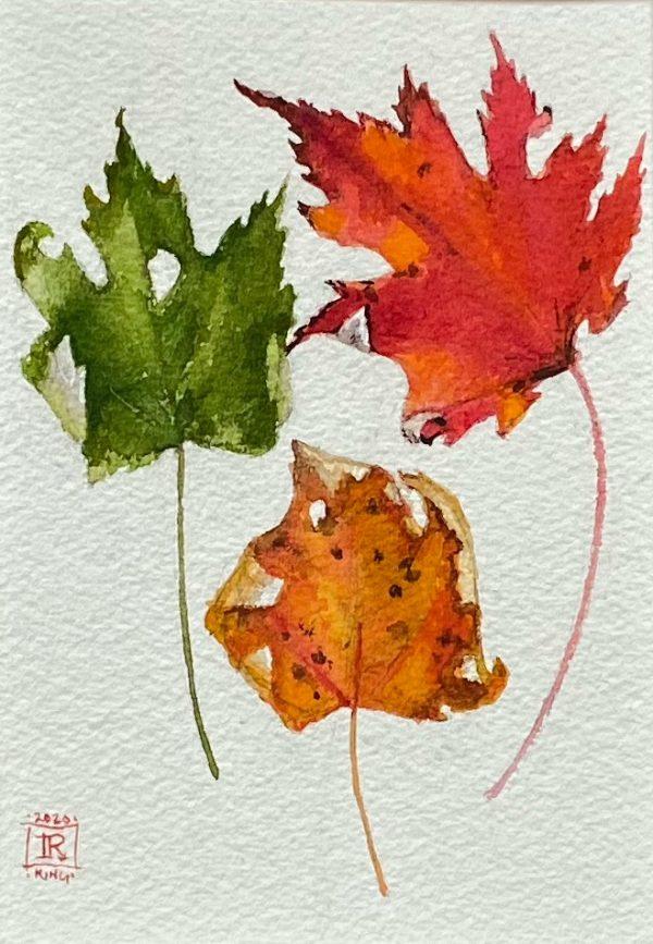 Nature study artist rebecca king hawkinson